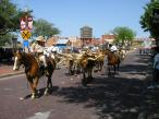 Cattle drive, Fort Worth, TX