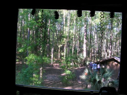 View from my window in the commune, GA